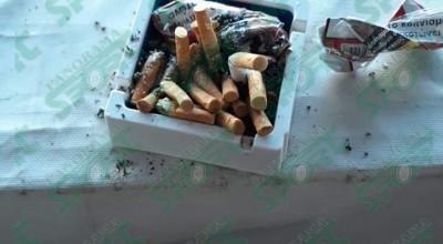 Gjici duhani (1)