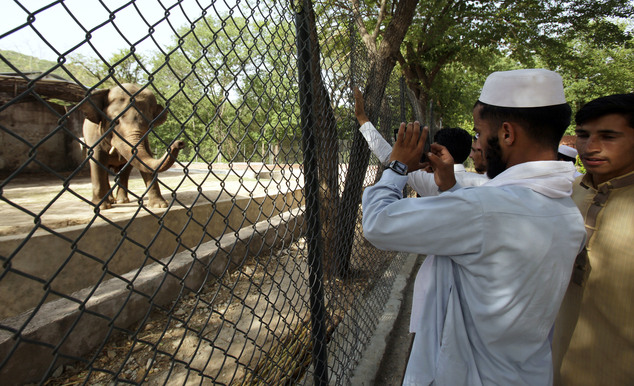 In this Tuesday, May 31, 2016, people look at an elephant 'Kaavan' at Marghazar Zoo in Islamabad, Pakistan. The plight of Kaavan, a mentally tormented bull elephant confined to a small pen in the Islamabad Zoo for nearly three decades, has galvanized a rare animal rights campaign in Pakistan, which has brought the issue to the floor of parliament. (AP Photo/Anjum Naveed)