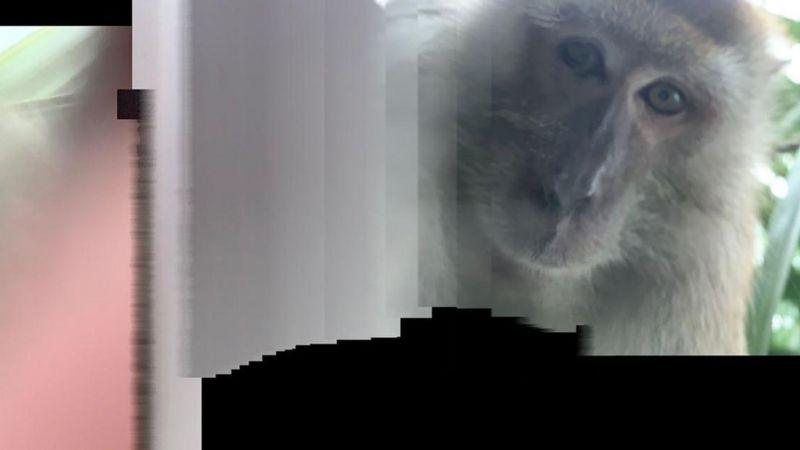 _114380589_monkeyphoto