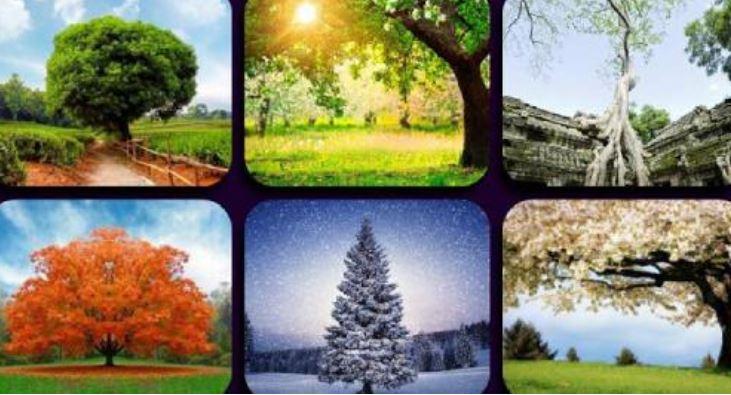 peme, imazh