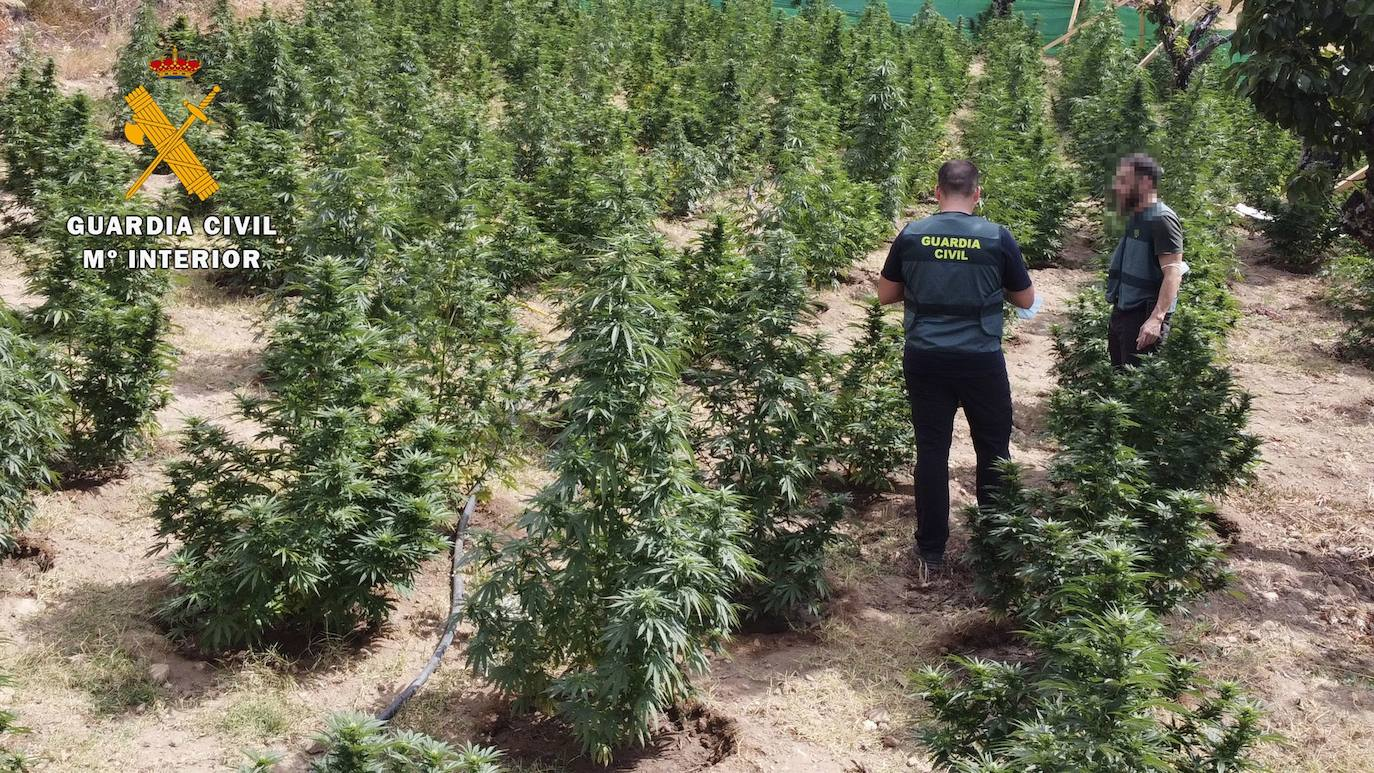 plantacion droge