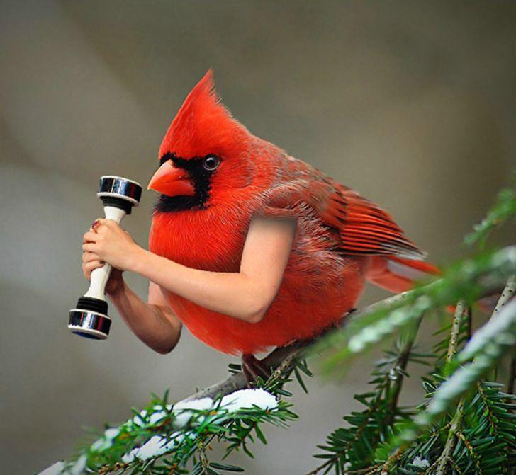 zogjte (21)