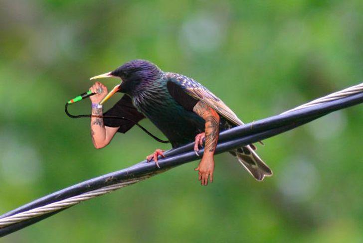 zogjte (4)